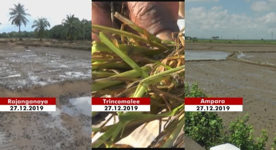 Paddy and chena cultivations destroyed by extreme weather