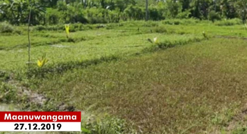 Farmlands flooded after Deduru Oya overflowed