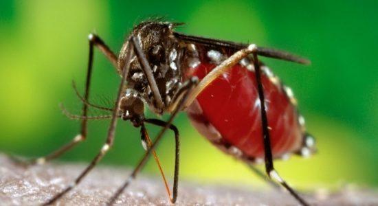 3000 dengue cases so far this year
