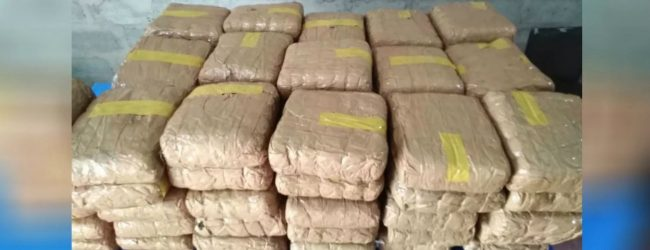 170kg of Kerala Ganja busted in Puttalam