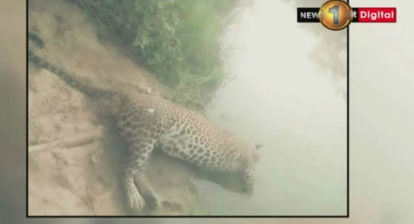 3 arrested in connection to Udawalawa leopard death