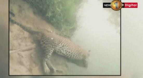 Extensive investigation over dead leopard in Mau Ara reservoir