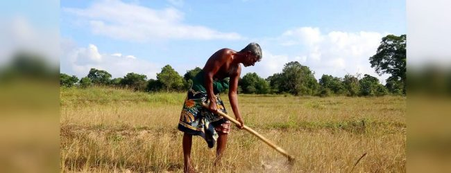 Prolonged drought leaves farmers helpless