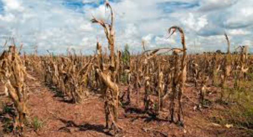 Over 9500 hit by drought in Kegalle