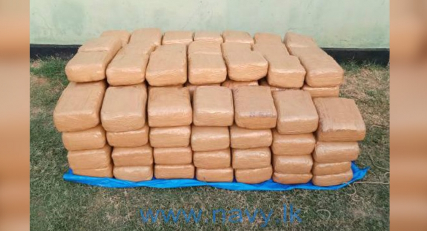 Navy recovers 300kg of Kerala cannabis from Jaffna