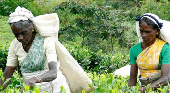 India to develop schools in Sri Lankan estate sector