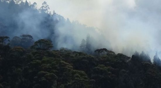 Fire breaks out at Singamale Mountain reserve