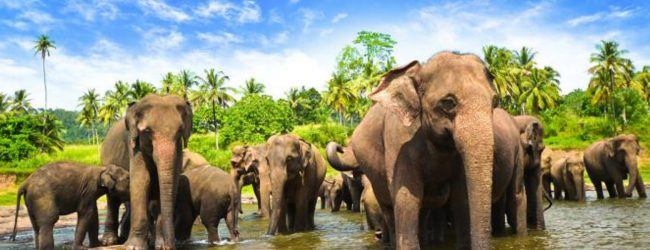 Udawalawa residents request for drain to keep off wild elephants