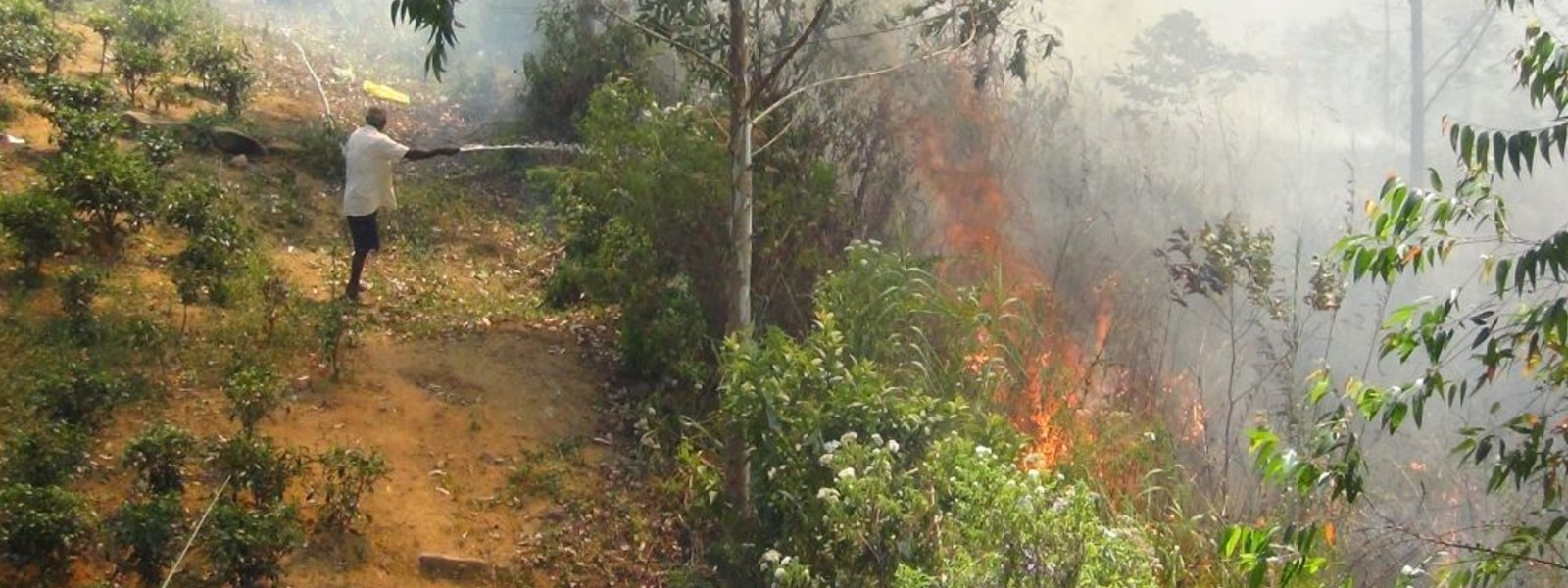 Forest fire destroys 25 acres of land in Hatton
