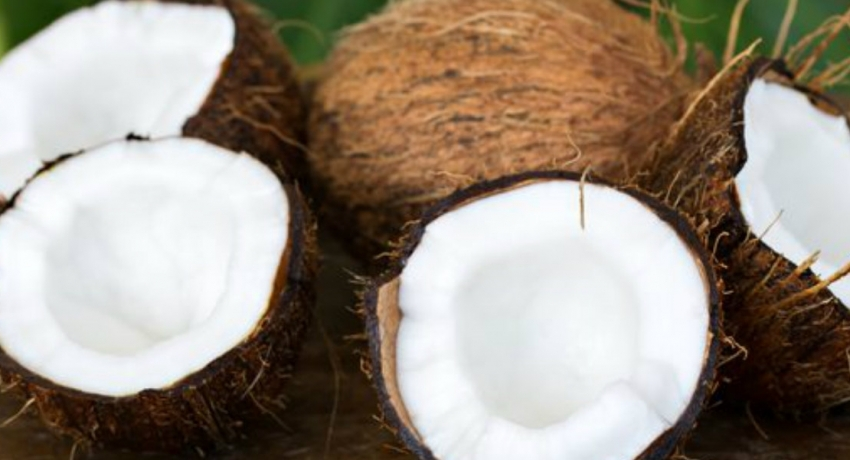 1.5 million coconuts for sale at e-auction