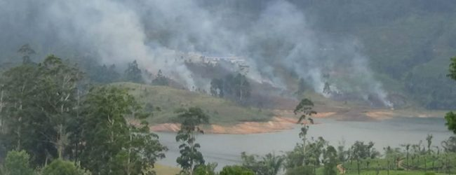 Fire destroys 10 acres of Castlereigh reserve