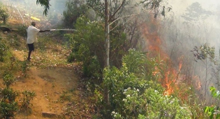 Number of deliberate forest fires on the rise