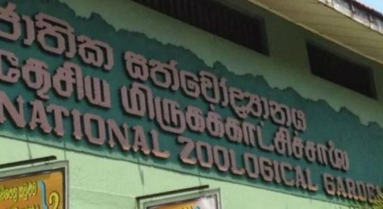 National botanical & zoological gardens, closed for 2 weeks