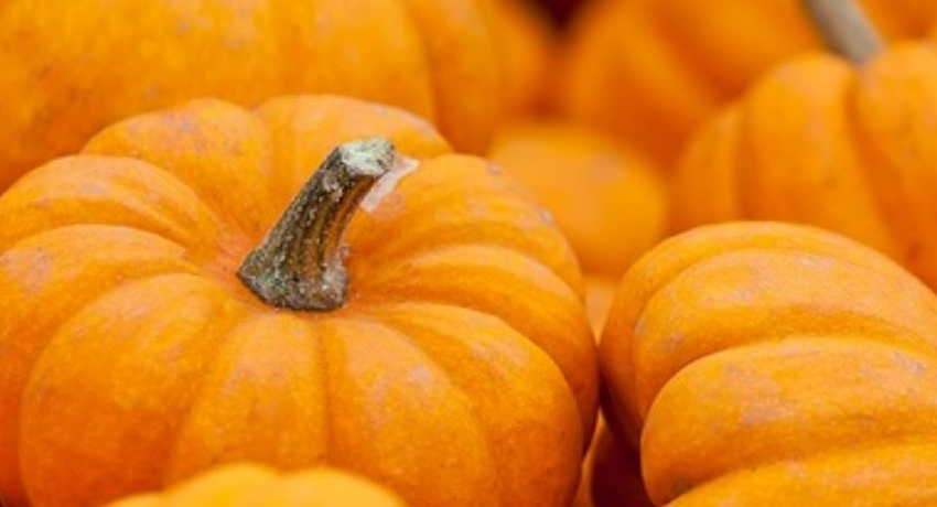 Free pumpkin for Samurdhi and daily wage earners
