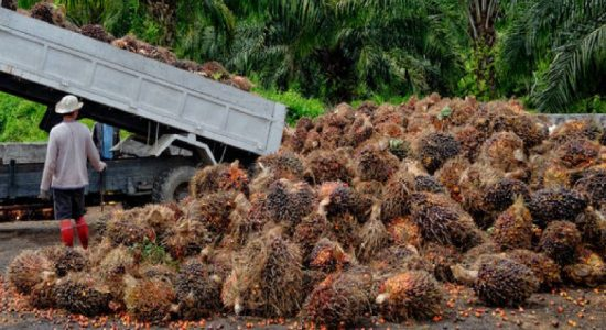 Special commodity levy on palm oil to be increased