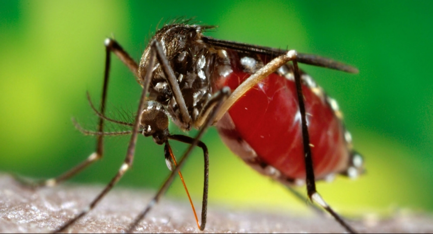 The risk of Dengue to intensify in the coming days: Health Authorities