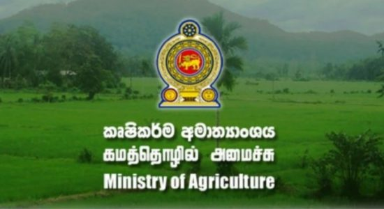 Government to Restrict Importation of some Agricultural Crops
