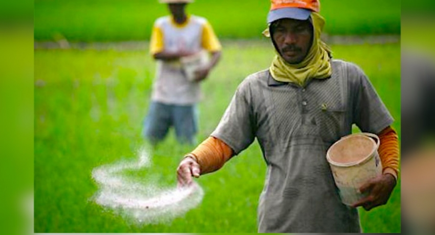 Shortage of Fertilizer disheartens Farmers across the island