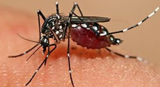 Risk of Dengue in Sri Lanka set to increase in the coming months