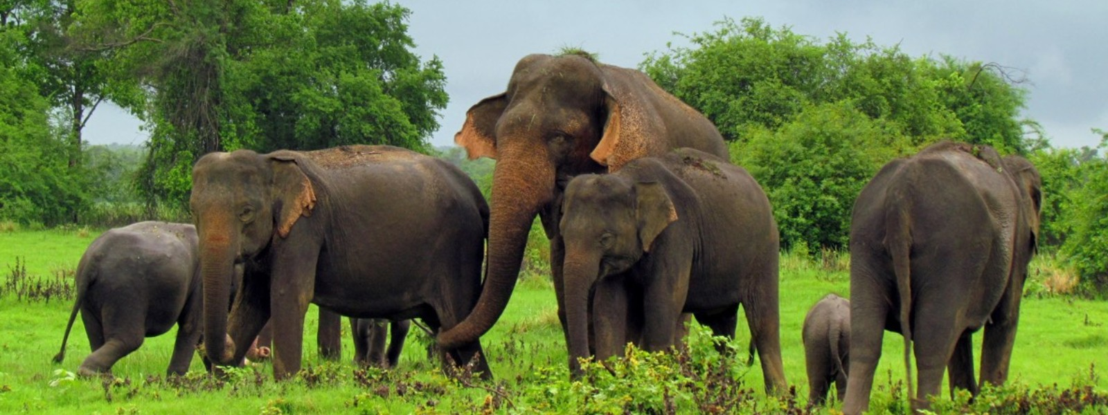 Human-Elephant Conflict: Do we wait till similar incidents happen in Colombo? Watch what happened during the last 24 hours…