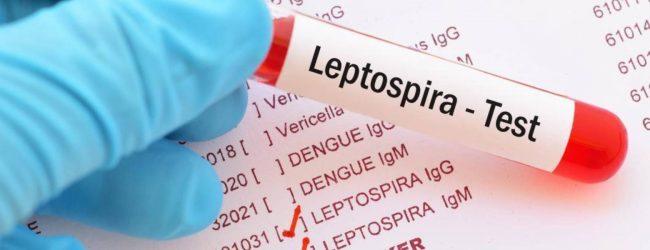 Sri Lanka urges action against leptospirosis amidst surge warnings