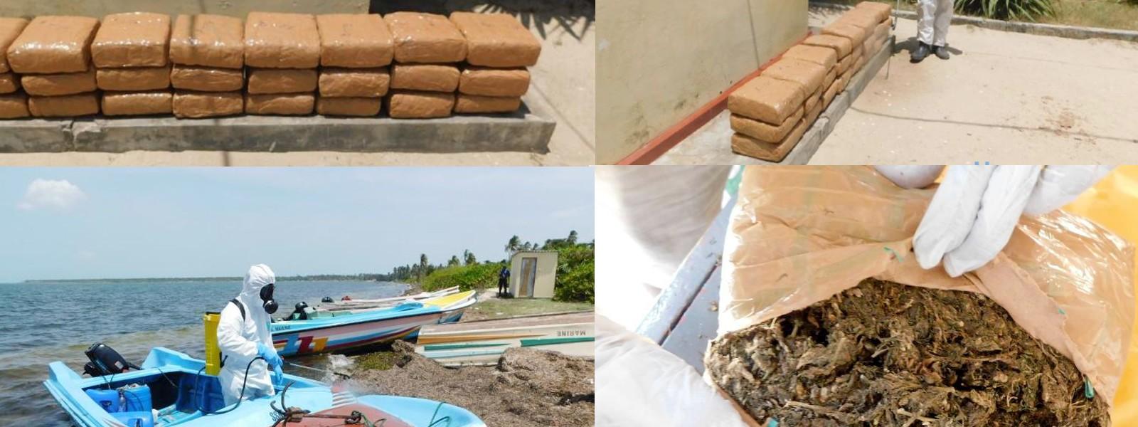 Sri Lanka Navy seized 58 kilograms of Kerala Ganja in Jaffna