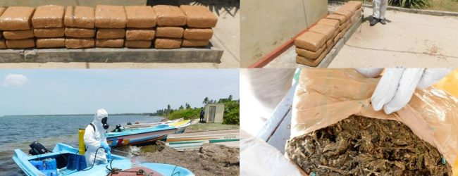Sri Lanka Navy seized 58 kilograms of Kerala Ganja in Jaffna