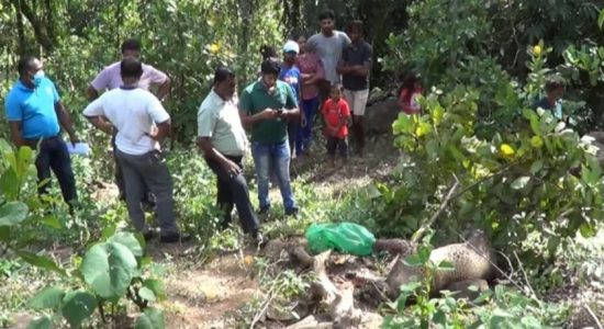 Wildlife officers discover carcass of a leopard killed in a snare in Galle