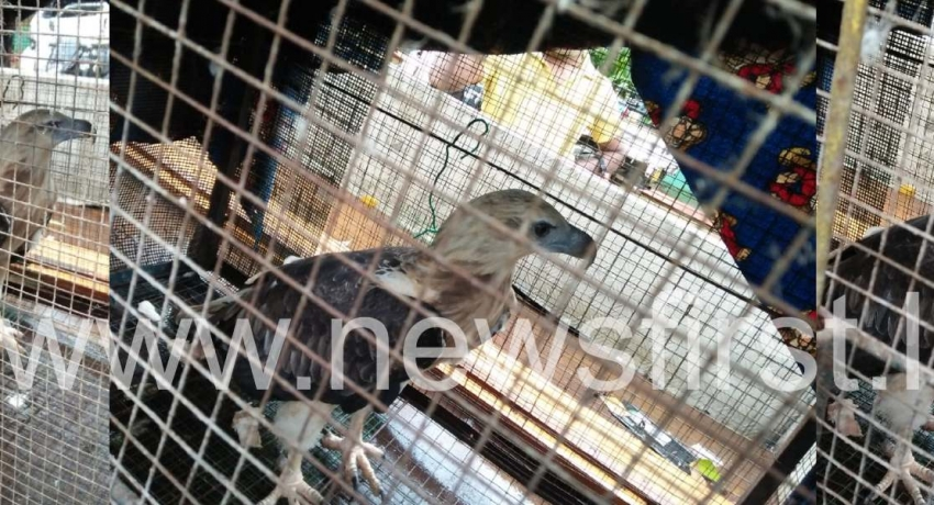 Drug trafficking Eagle seized