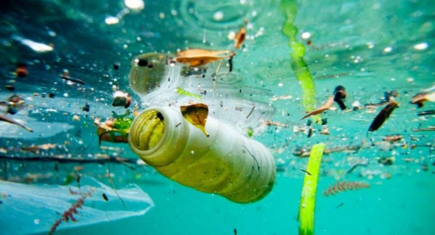 Humans ingesting micro plastics due to ocean pollution – expert