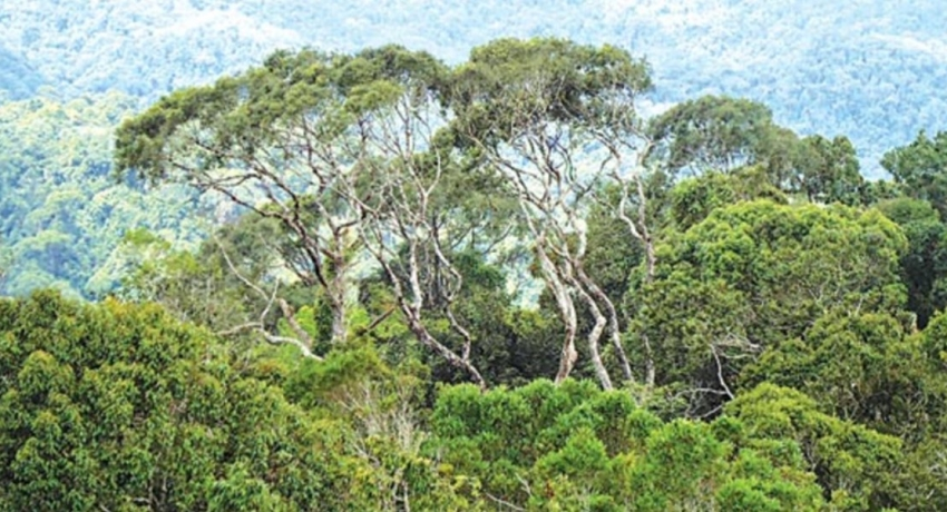 Cabinet proposes Forest Land for 'economic purposes': environmentalists up in arms