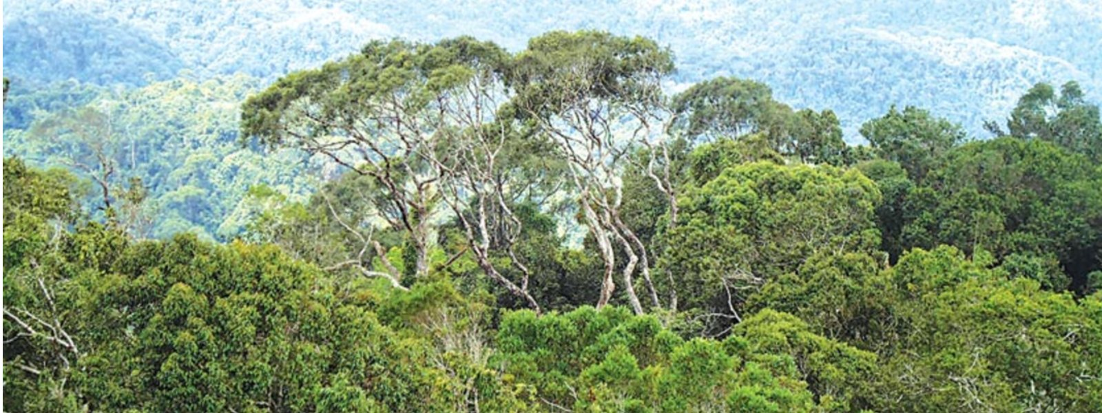 Outcry over move to revoke circular on other forest lands