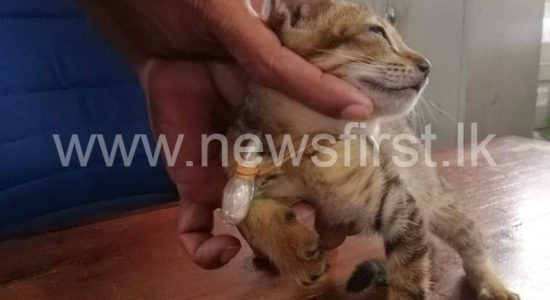 First came the Eagle, and now a cat – Traffickers use Narco-Cat to send heroin to prison