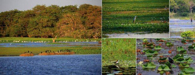 Restoration of Ramsar wetland in Anawilundawa underway: Ministry of Wildlife