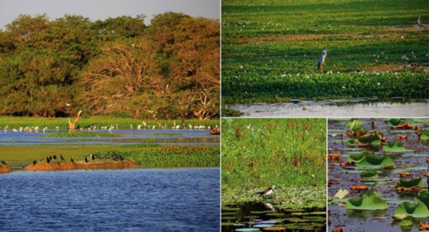 Committee probing illegal clearance of Ramsar wetland, begins field observations