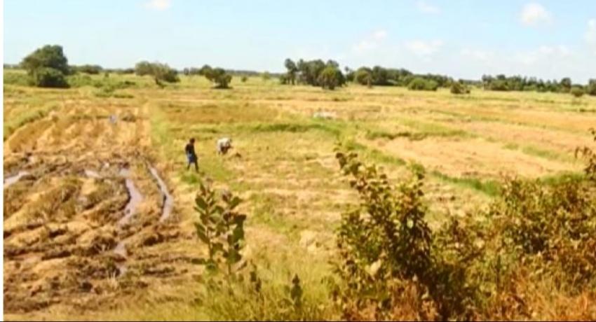 Bulldozer operator arrested with regard to razing Anawilundawa Ramsar Wetlands