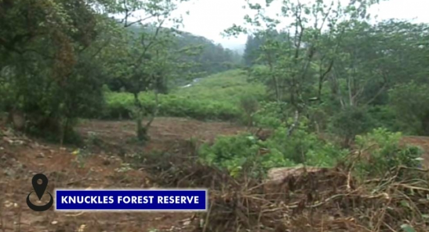 Land area in Knuckles forest reserve cleared unlawfully for vegetable cultivation