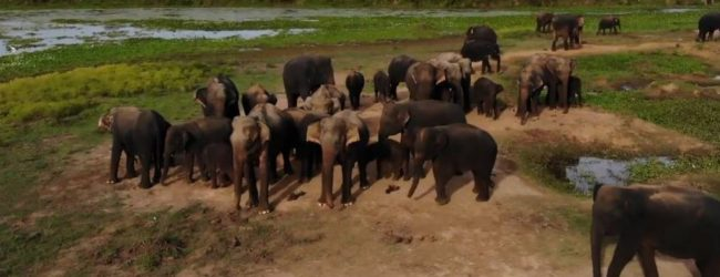 Will wild elephants encroach into cities due to unorganized development activities?