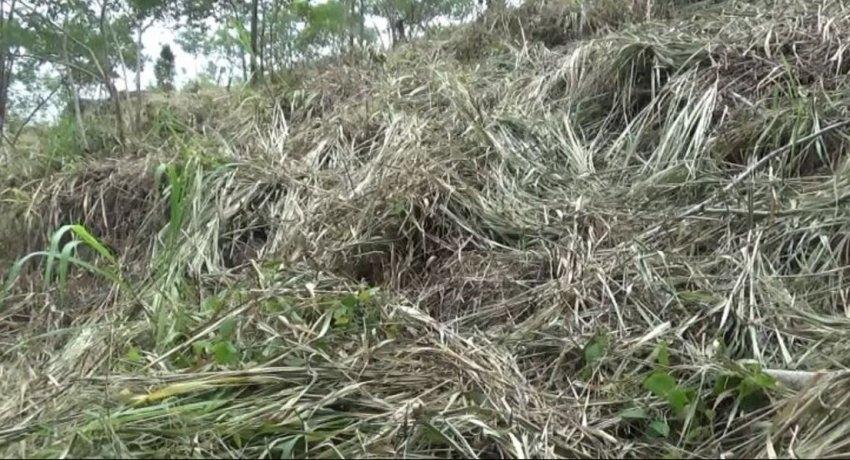 Illegal land grab attempts put Hanthana Mountain Range at risk