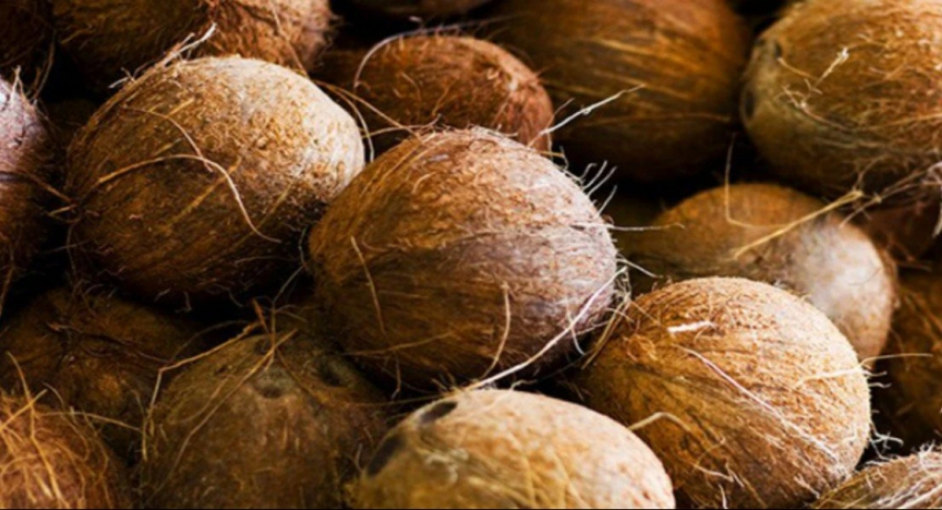 CAA raids traders selling coconuts above MRP; State Minister to address measuring issue