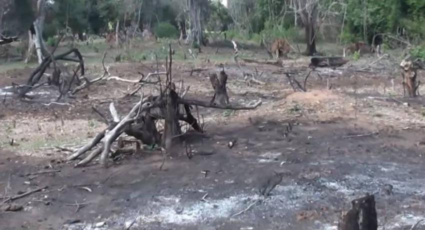 Valuable flora in Chunnakkadu reserve destroyed
