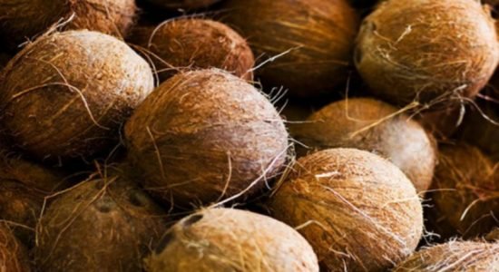 Shortage of 250 million coconuts this year: Coconut Development Authority