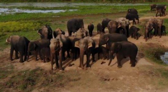 Will wild elephants encroach into cities due to unorganized development activities?