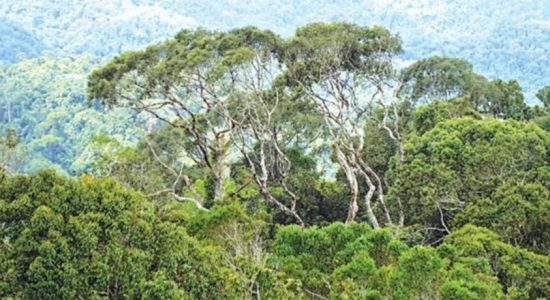 'Other State Forests' again under authority of District & Divisional Secretaries