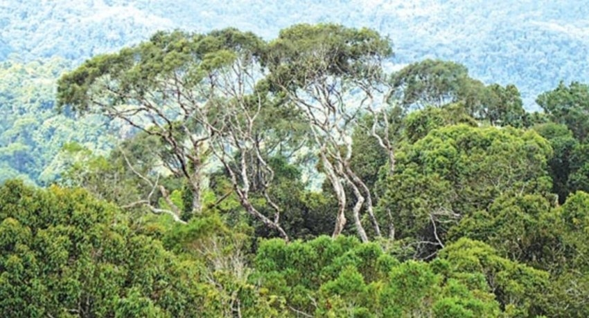 'Other State Forests' not considered in Sri Lanka's forest cover