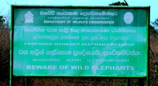 Managed elephant reserve project in Hambantota riddled in delays