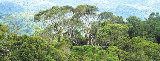46th COVID-19 death in Sri Lanka was a resident from Imbulgoda