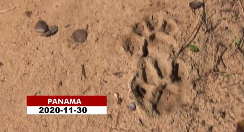 Man killed by a leopard in Ampara