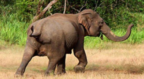 Wild elephant issue continues ravaging Hambantota