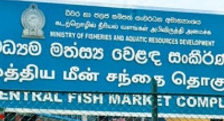 PELIYAGODA FISH MARKET WILL RE-OPEN TODAY (16)